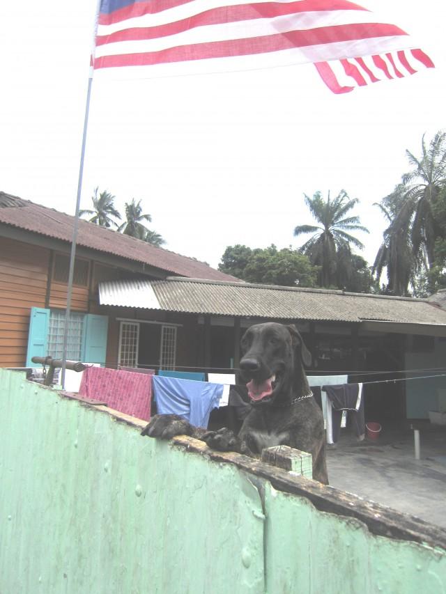 XL dog
